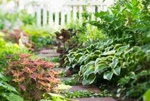 Garden things - Flowers, plants & ideas / by Glenis C.