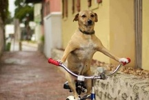 Bicycle & Animals  / Bicycle's & Animals Is My Most Popular Board. Also One Of My Favorite. All though You Wont Find Any Cat's Because I Just Don't Like Them. I'm More Of A Dog Person. However There Are Many Other Animals Riding On Bicycle's. / by Michael Bain