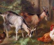 animales-1 / todos loa animales hermosos