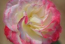 Flower Artwork & Photography