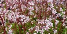 Flowers / Shrubs / Trees