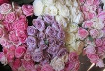 Nairobi Flowers / Some of beautiful flowers we run into everyday in Nairobi