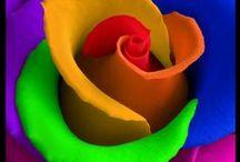 kleur explosie / by anne schaafsma