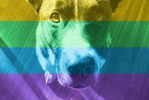S L E V I N and the other dogs / Slevin non è solo il mio cane, ma un mio riflesso. E' la parte più naturale del mio essere, pura e senza costrizioni di nessun tipo.   My lovely dog