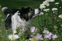 2014 Dog Days of Summer Photo Contest / We will display all of our August 2014 pet-in-the-garden entries here!