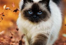 Animals and nature / Cute animals and pretty plant of nature.