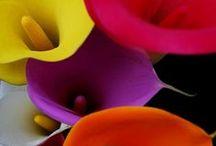 Flores para adornar