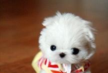 Cutie pie Pets