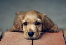 犬 (dog)