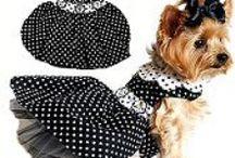 ♡ Cãozinhos ♡