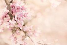 ✿ Spring ✿