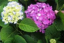 Gardens to love...