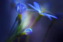 Beautiful Blues / by Linda Heather