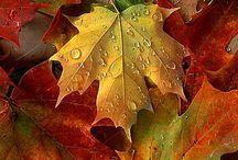 Autumn / Autumn, Fall, Herbst