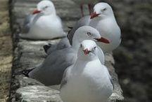 Bouys & Gulls