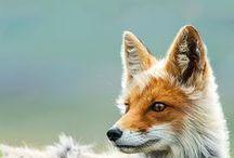 Bichos / Sobre animais das mais variadas espécies.