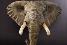 Fibreglass Reproductions / Replica Elephant, Rhino and Hippo trophies