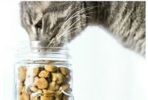 Cat Recipies / Bake your furry friend some love! Or it get some different ideas for your next bake sale!