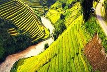 VIETNAM TRAVEL / Anything you need to know about visiting Vietnam. Best places to see, what to do, off the beaten track travel, tours, activities, visa information, food, culture and more.