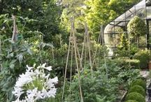 Outdoors: Herbs and Gardening / by Heather Glaeser