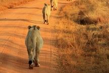 Sudafrica / Eccezionali paesaggi naturali, straordinari esemplari faunistici nel loro habitat naturale, dinamiche città dal grande fascino etnico-culturale e tanto altro da scoprire al link www.qualitygroup.it