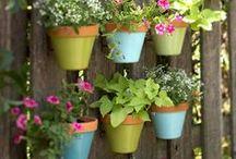 Côté jardin / Nos pins pour un jardin accueillant, familial et eco-friendly