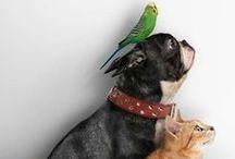 Animal Love / Les animaux sous toutes leurs formes... parce qu'ils font aussi partie de la famille!