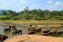 Sri Lanka / Ceylon, Isola Risplendente, Perla d'Oriente, Lacrima dell'India... tanti sono i nomi che sono stati dati a quest'isola meravigliosa, caratterizzata da un mix perfetto di cultura e natura. Ben 11 sono infatti luoghi dichiarati Patrimonio dell'Umanità dall'Unesco, inseriti in una vegetazione straordinaria, una fauna sorprendente e circondati da un mare d'incantevole bellezza... la destinazione perfetta per una vacanza completa sotto tutti i punti di vista!