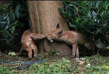 foxfoxfox