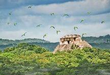 Belize / Foreste incontaminate incontrano la seconda barriera corallina più lunga del mondo. Benvenuti nel paradiso degli amanti dell'eco-turismo e delle immersioni!