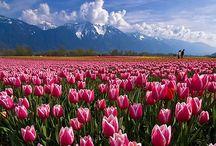 Piante per la primavera / Prime piante da vaso per la primavera