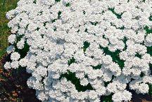 Piante perenni / Le più belle piante perenni 128 129 130