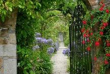 Ogrody / ogrody aranżacje ciekawe roślny pielęgnacja