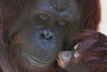 Animal Moms & Babies