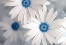 Nature - White