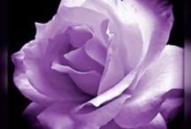 Nature - Purple