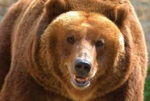 Bears & Forest Animals