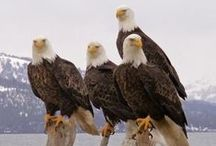 EagleDay / My favourite animals<3