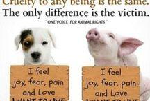 Vegan Because...