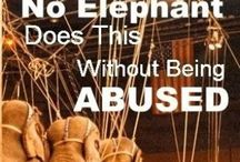 Stop Exploiting Animals For Entertainment - it's cruel! / by Vicki Nelson