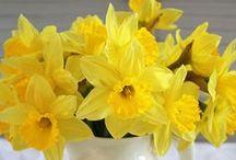λουλούδια της άνοιξης