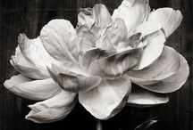 BLACK & WHITE / Inspiraciones en blanco y negro...