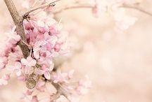 PINK / Inspiraciones en rosa.