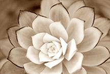 WHITE ON WHITE / Mis inspiraciones en blanco