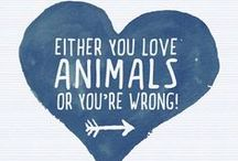 Great Pet Quotes / So many truths in so few words! Some of our favorite animal quotes.