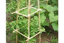 Tuinieren / Alles wat mij leuk en handig lijkt voor de moes-, en kruidentuin