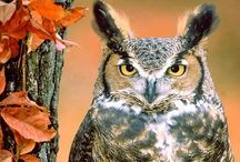 Owls / I find owls to be beautiful & mysterious. Here are some Owl photos & art from around Pinterest.