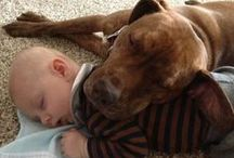 Pit Bulls and Kids / Pit Bulls And Kids