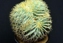 Cactus y Suculentas / by Al Dsn
