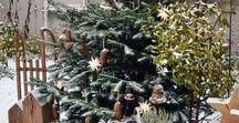 "Winter ""Garden Ideas"" / All kinds of ideas for winter gardening"